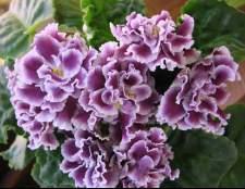 Выбираем домашние растения по знаку зодиака.