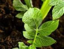 Выбор грунта для комнатных растений